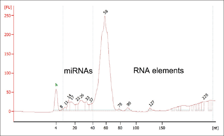 "Figure 1: RNA distribution in human spermatozoa. RNAs in sperm, which include microRNAs and other ""RNA elements,"" are characterized by short length, multiple isoforms, and low abundance"